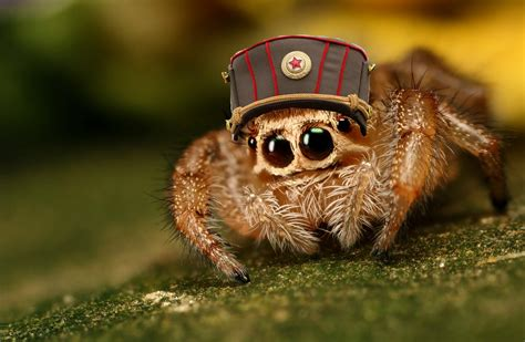 spider, Animals Wallpapers HD / Desktop and Mobile Backgrounds