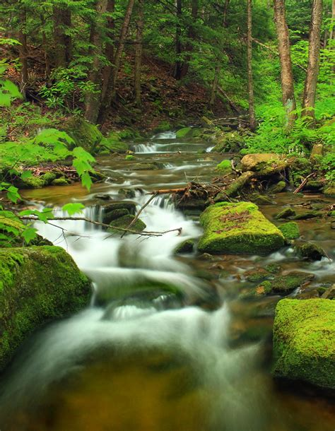 Free picture: water, waterfall, stream, wood, nature