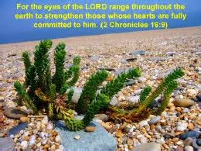 The Word of the Lord is tried! - Evangelical Endtimemachine
