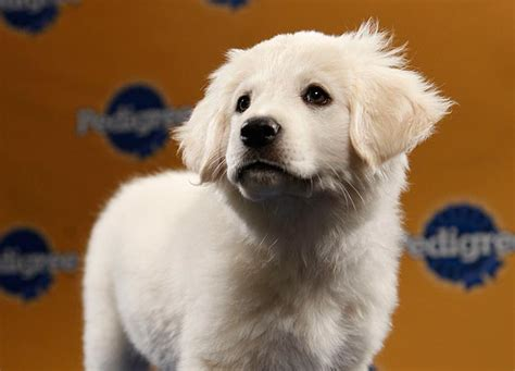 Puppy Bowl VII Starting Line-up | Fuzzy Today