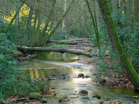 Free picture: wood, ecology, nature, water, leaf, tree